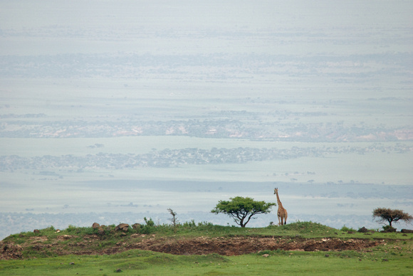 African wildlife in northern Tanzania in Serengeti National Park and Ngorongoro National Park. Photography by Peter Stanley, 2012.