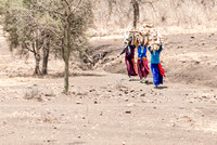 Maasai women carry firewood